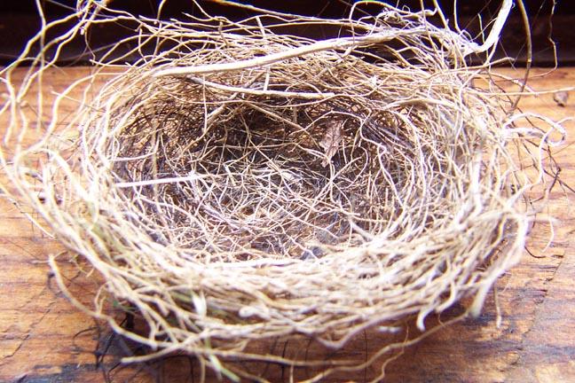 Empty_nest