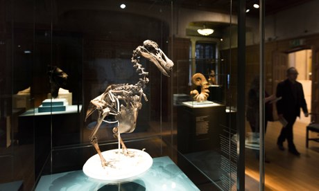 A-dodo-skeleton-on-show-i-011